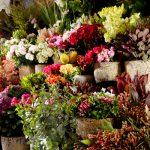 Flower-availability-brisbane